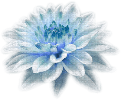 fleur (