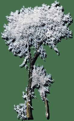 chantalmi winter hiver blanc whiter givre