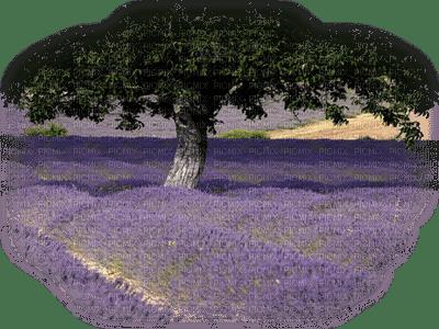 loly33 paysage lavande