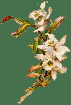 Flower, Flowers, Easter, Pink, Peach - Jitter.Bug.Girl