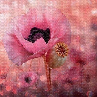 fond pink bp