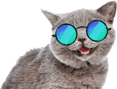summer cat funny chat êtê lunettes