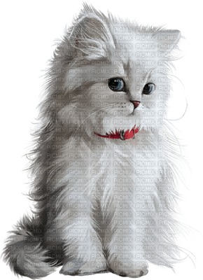 white cat chat blanc