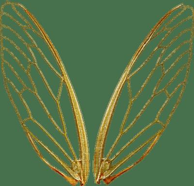 wings anastasia