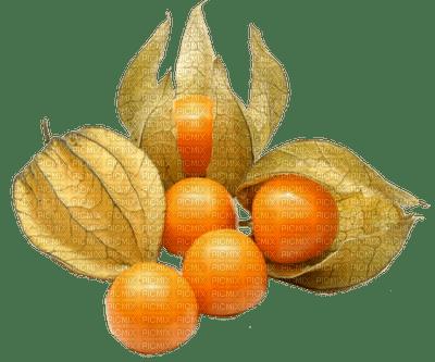 fruit physalis-halloween-autumn