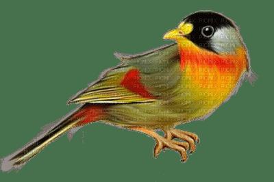 image encre la nature oiseau edited by me