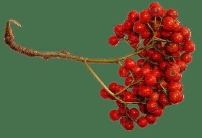 deco autumn automne berry