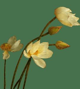 minou-yellow-gula-flower-blomma-fiori-fleur