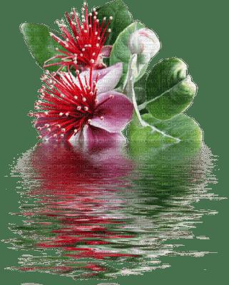 blomma-vatten-röd