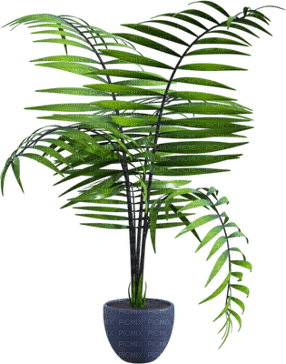 plant palm leaves room chambre zimmer pflanze paume pot  spring printemps  deco    summer ete  tube  sommer  garden jardin garten