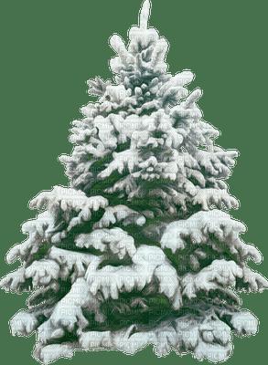 sapin  neige pine tree snow