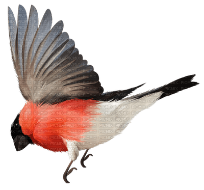 spring printemps bird vögel oiseaux deco tube garden  vogel oiseau birds