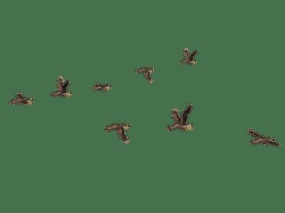 birds katrin