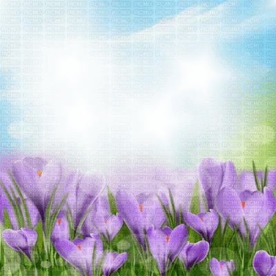 spring printemps fond background hintergrund  image flower fleur paysage blossoms landscape purple grass tube  overlay