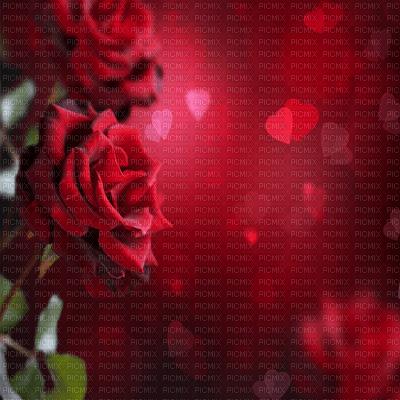 red roses transparent bg rouge fond rose