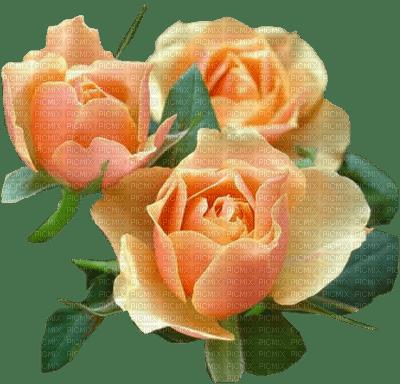 orange roses orange rose