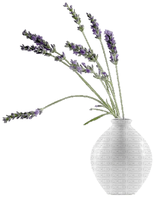 vase, flowers, lavender, sunshine3