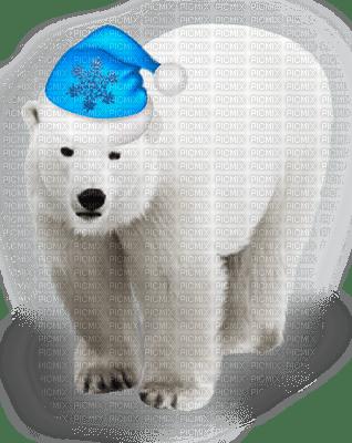 Ours polaire-polar bear-winter-hiver-Noël-Christmas