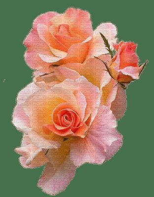 orange, peach rose flower, sunshine3
