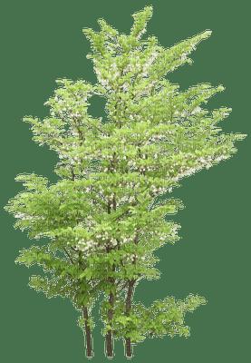 patricia87 arbre