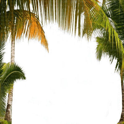frame palm tree  cadre paume
