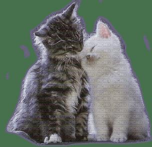 cats  love chats amour 🤍de tendresse