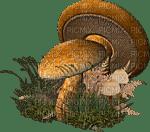 champignons GS