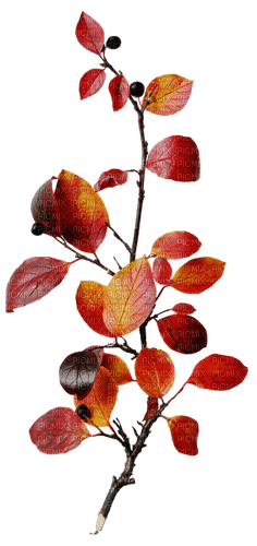 Autumn Fall leaves branch deco, sunshine3