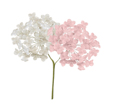 Fleur Flower Hortensia Tube Image Gif Aime Love Amour Fond Fleur