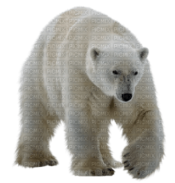 bear katrin