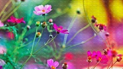 background - Nitsa