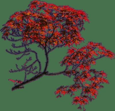 Plants.Branche.branch.Red.Arbre.Tree.Automne.autumn.plante.Victoriabea