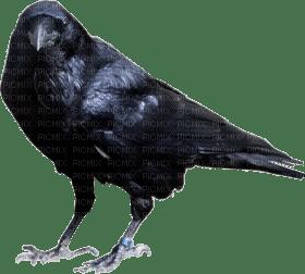 crow katrin