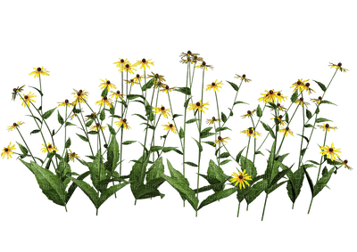 fleur jaune decoration décoration smiraikun smkstan6 smkstandecor fleurs