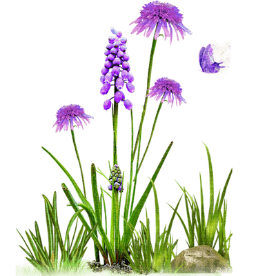 purple flowers, sunshine3