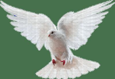 minou-bird-dove-oiseau-Colombe-uccello-colomba-fågel-duva-decoration-deco
