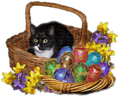 Chat.Cat.Gato.Easter.Pâques.Victoriabea