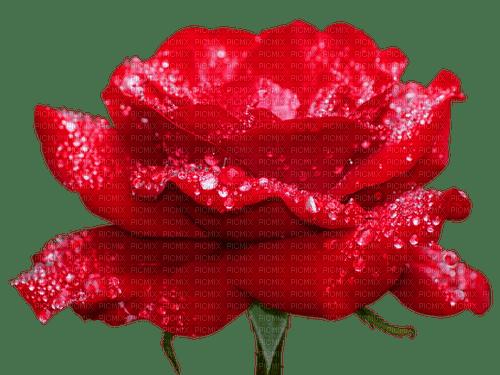 Fleur.Red rose.Flower.Victoriabea