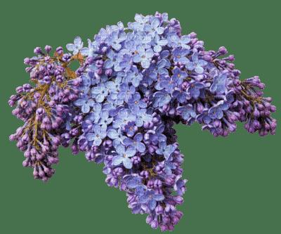 Fleur Lilas Picmix