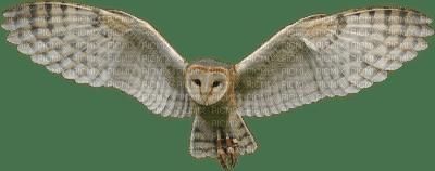 Kaz_Creations Owl Bird