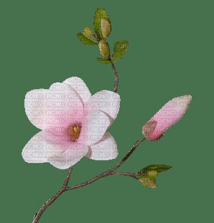 fleur*kn*