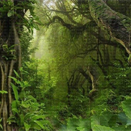Dschungel, jungle, nature