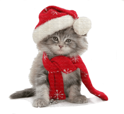 santa paws �� tube cat cats kittens dog chat chatons