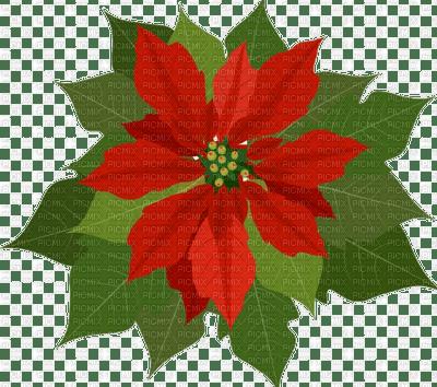poinsettia fleur noel  deco flower christmas