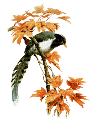 automne  plante  volaille  branche_autumn the plant bird branch
