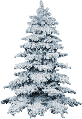 pine tree snow winter sapins neige