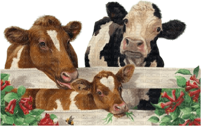 3 vaches dans un prè.