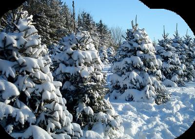 winter katrin