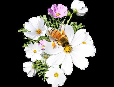 image encre la nature abeille flowers printemps edited by me