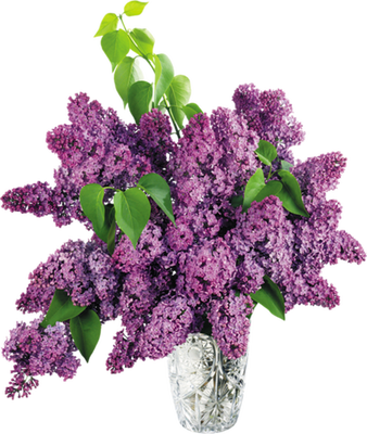 patymirabelle lilas